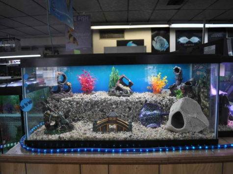 Aquarium Decorations Decoration Designs Guide