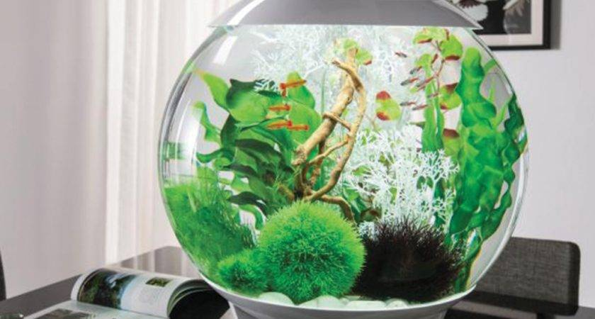 Beautiful Aquarium Biorb Halo Which