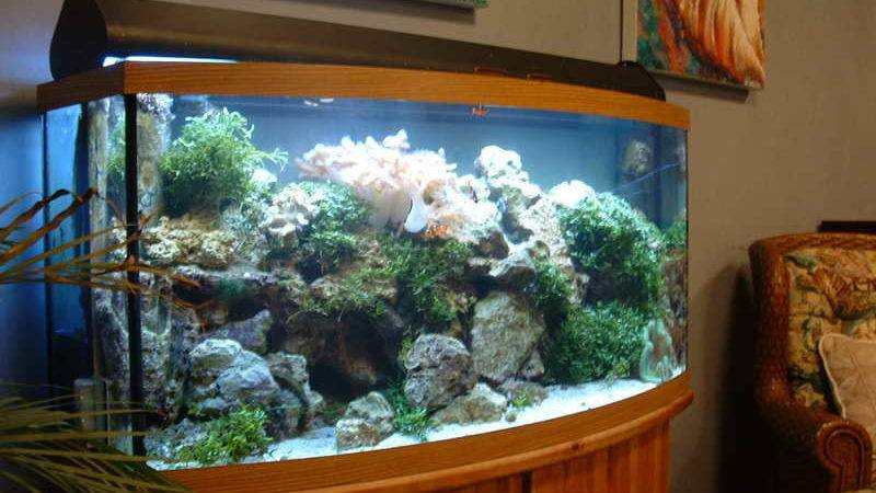 Beautiful Aquarium Decorations Ideas Cabinet Design