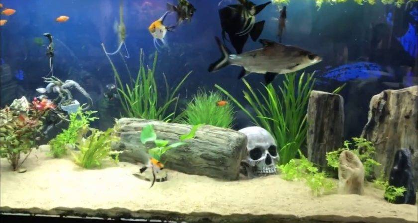 Beautiful Aquarium Design Idea Relax Youtube