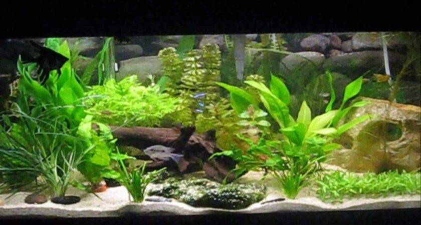 Beautiful Aquarium Youtube