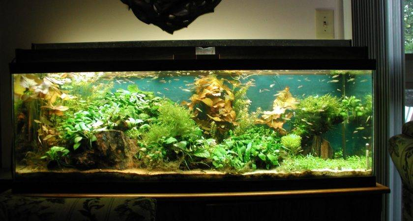Beautiful Aquariums Aquarium Recipeapart