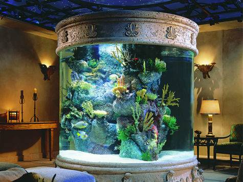 Beautiful Home Aquarium Interior Design
