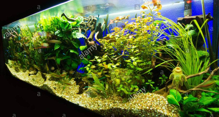 Beautiful Planted Tropical Freshwater Aquarium