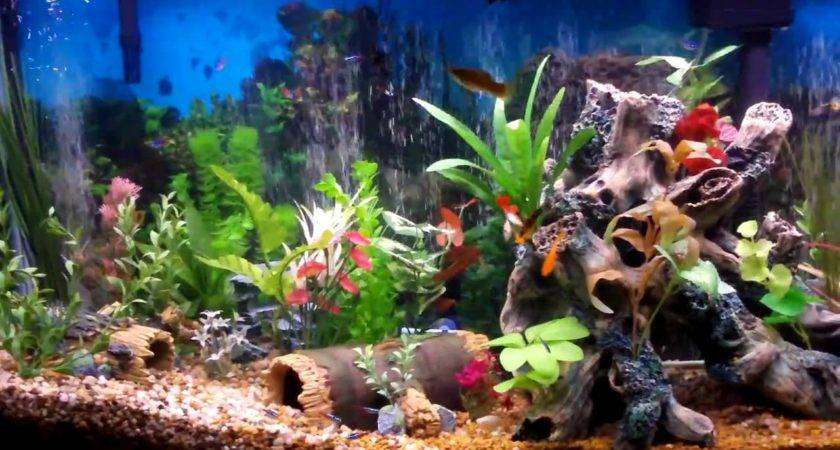 Best Fish Tank Aquarium Ever Created Beautiful Youtube