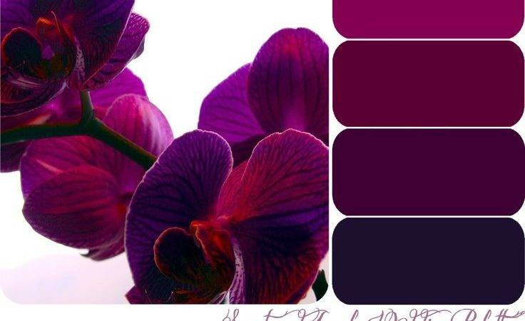 Best Purple Color Schemes Ideas Pinterest