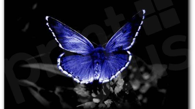 Blue Butterfly Wall Decor Canvas Print