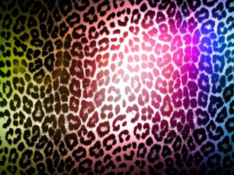 Colorful Leopard Print High Definition
