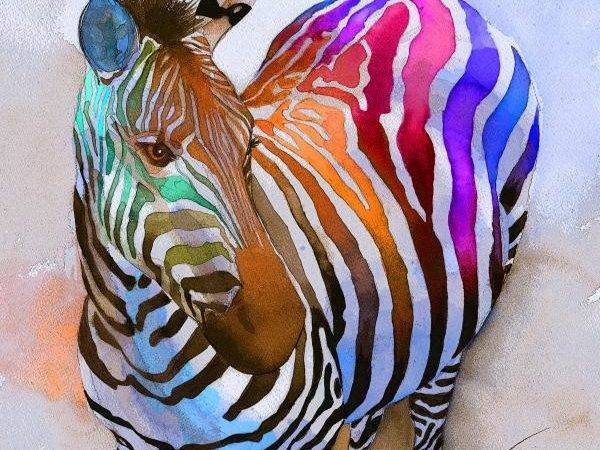 Cool Zebra Funny Animal