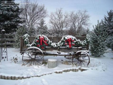 Country Christmas Trees