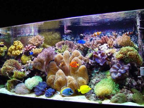 Decoration Exquisite Saltwater Aquarium Design Ideas