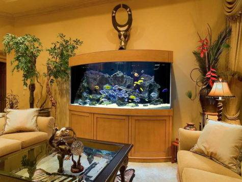 Decoration Saltwater Aquarium Design Ideas Living