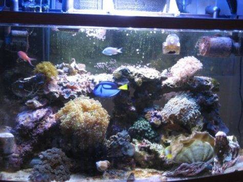 Fish Tank Decoration Ideas Simple Ways Home