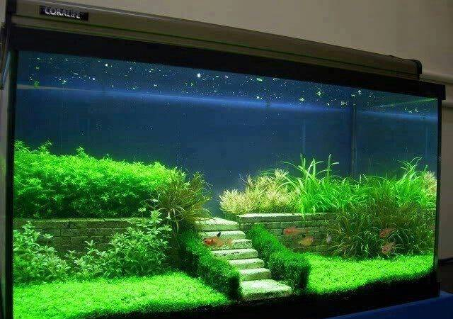 Great Aquascaping Fish Tanks Terrariums Fairy