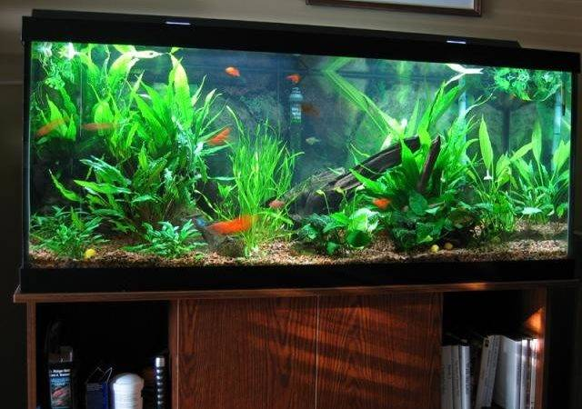 Healthy Fish Tank Decorations Tropical