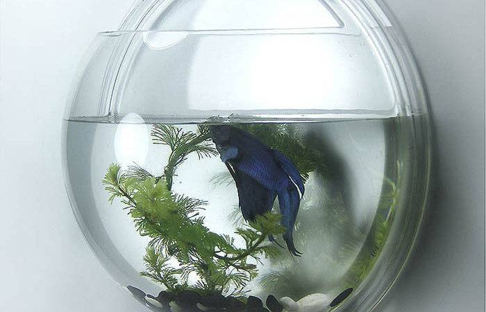 Home Decoration Pot Wall Hanging Mount Bubble Aquarium