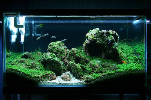 Make Beautiful Minifiss Aquariums
