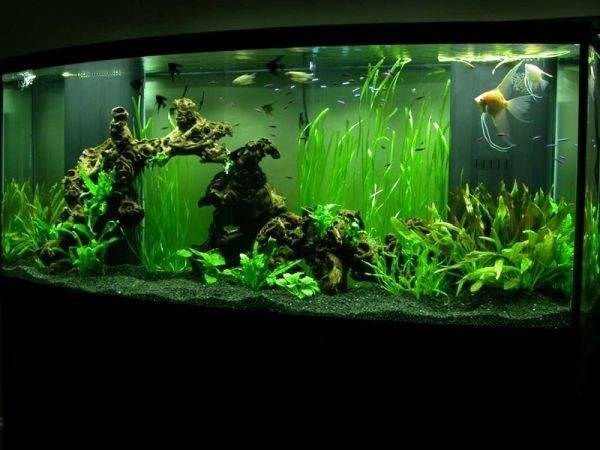 Modern Fish Tanks Inspire Relaxation