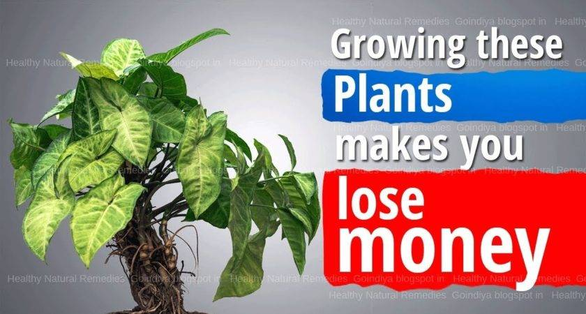 These Plants Bring Bad Luck Poverty Negative Energy