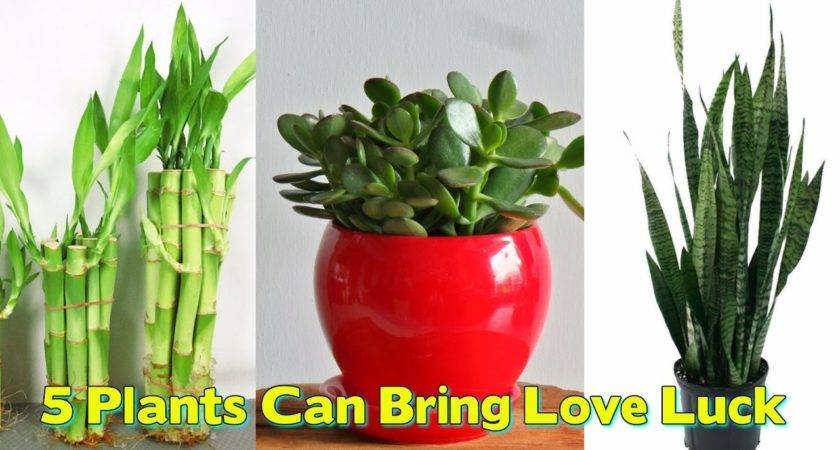 These Plants Can Bring Love Luck Prosperity Your