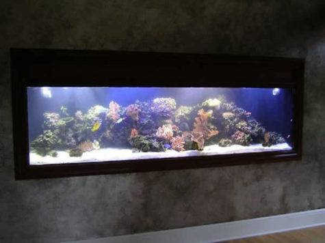 Wall Aquariums Must Designs