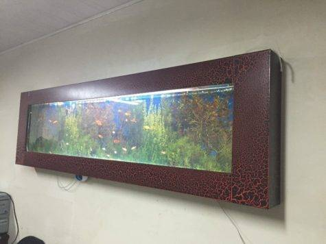 Wall Hanging Aquarium Fish Tank Buy