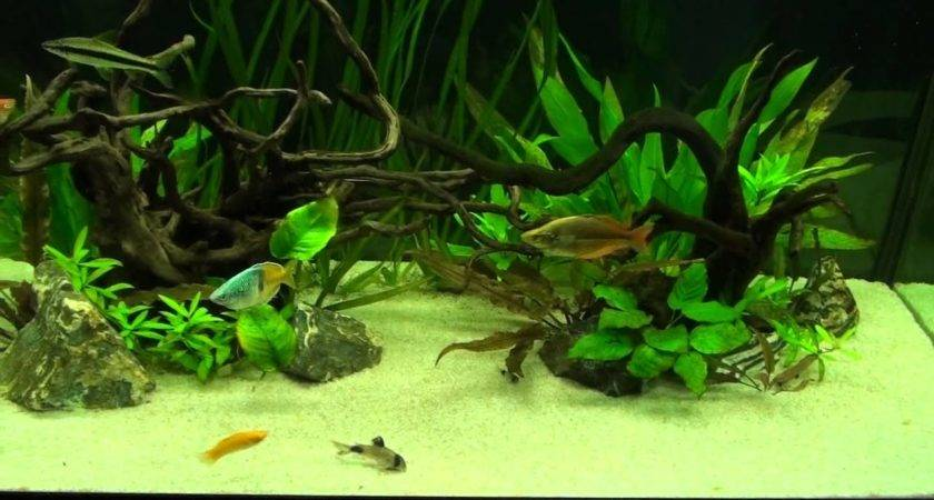 World Most Beautiful Freshwater Aquarium Youtube